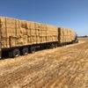 Shedded Barley Straw - conventional header straw