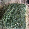 700 x Lucerne Hay Small Bales