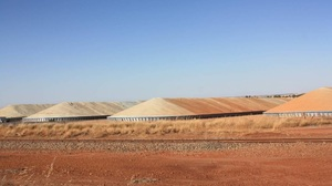 World Grain Report - Wheat export pace solid but barley lagging…
