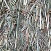 Oaten Hay 8x4x3 -310 x 570 KG Approx Bales & Shedded