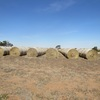 TRITICALE Hay in 5x4 Rolls, 170 Bales