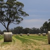 Clover and Rye Hay 5x4 rounds