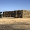 Sugar Cane Trash  8x4x3 Bales 600 kgs
