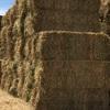 Quality Targa Oaten Hay - Ballarat