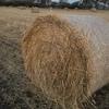 Wheaten/Rye Grass Hay x 1000 Rolls