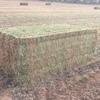 600mt Vetch Hay 8x4x3 ##Shedded##