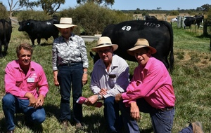 Total Clearance of 168 Bulls at Te Mania Angus Autumn Bull Sale