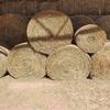 14 Rolls . Wheaten Hay - SOLD PER BALE