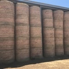 120 Sub Clover and Rye 5x4 Round Bales
