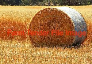 chaffing oaten hay