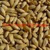 Single load F1 Barley wanted ex farm