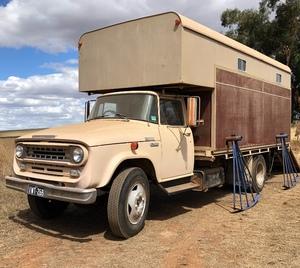International Horse Truck