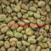 350mt Fiesta Faba Beans For Sale Ex Farm