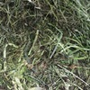 Clover & Rye Little Bales For Sale Ex or Delivered
