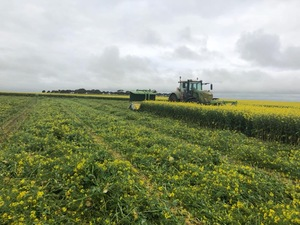 CANOLA SILAGE FOR SALE