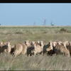 Looking for grazing land for merino sheep