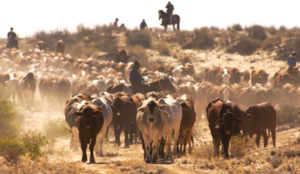 mOOvement could reduce losses for Livestock Farmers