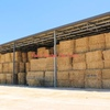 200 OATEN HAY 4X4X8 BALES SHEDDED.##PRICE REDUCED##