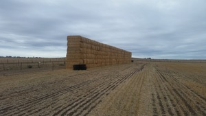 795 x Bales of Header Trailed Barley Straw 8x4x3, 480+ Kg's - Sold By The Ton - 500 kg ave