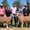Kurralea Poll Dorsets to $15,000 and White Suffolks to $17,000