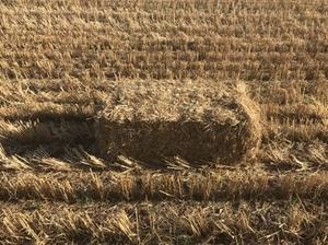 Small straw bales