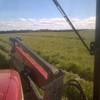 Sheded Italian rye and Arrowleaf hay