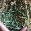 Good Lucerne Hay for sale in 8x4x3's
