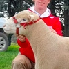 Tattykeel, Gullendah and Hillden Ram Sale results