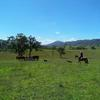 FARM MANAGER / HORSE RIDING SUPERVISOR