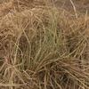 Oaten and ryegrass hay