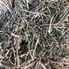 2nd 3rd &4th Cut Shedded Lucerne hay in 8/4/3's for sale