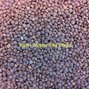 2 M/T of Lentils Cleaned Gaucho Treated