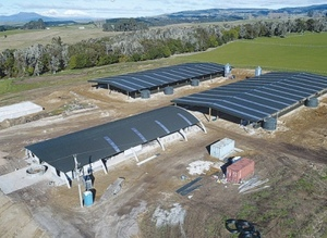 New NZ Sheep Dairy expected to milk 5000 Ewes