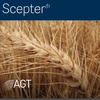 AGT Scepter Wheat Seed