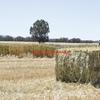 Barley hay wanted in Squares Around Elmore - Yarrawonga - Avoca - Stawell Area