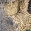 Header Trail Lucerne Straw For Sale in 8x4x4's