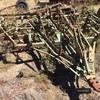 25 Tyne John shearer level lift scarifier for sale