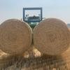 Wheaten Straw 5x4 Rolls