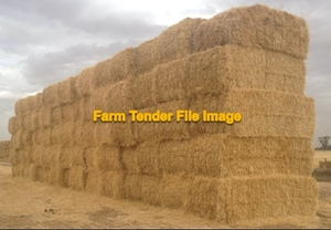 600mt Barley Straw 540-550kg 8x4x3 Bales