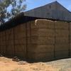 Barley Straw 8x4x3 - 800 x 500 KG Approx Bales