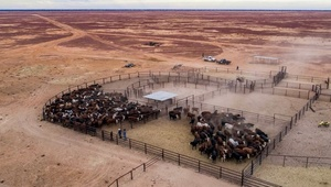 Second largest Cattle station could make $35 million
