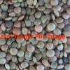 Old Season Flash Lentils 80/Mt