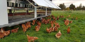 Aussie Chicken Caravan