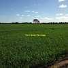 Farming Land wanted For Lease/Shares around Elmore