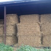 Vetch / Triticale Hay 8x4x4  750-800 KG Approx Bales & Shedded.