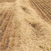 New Season Header Trail barley Straw for sale in 8x4x3's ex Farm or can assist with freight