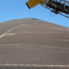 Big yields and prices remaining firm for Canola Growers