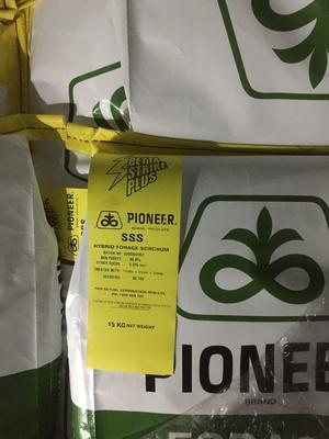 Pioneer sss seed