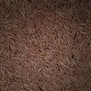 Eurabbie oats