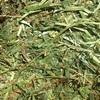 New Season A1 Vetch Hay ### See Test ###